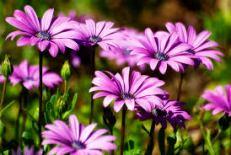 gratitudepurpleflowers